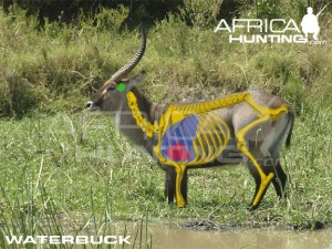 waterbuck2